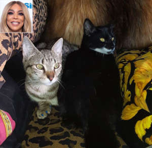 Wendy Williams' Cat Reveals Her 'Mom's Plans For This Weekend - Read The Funny Message
