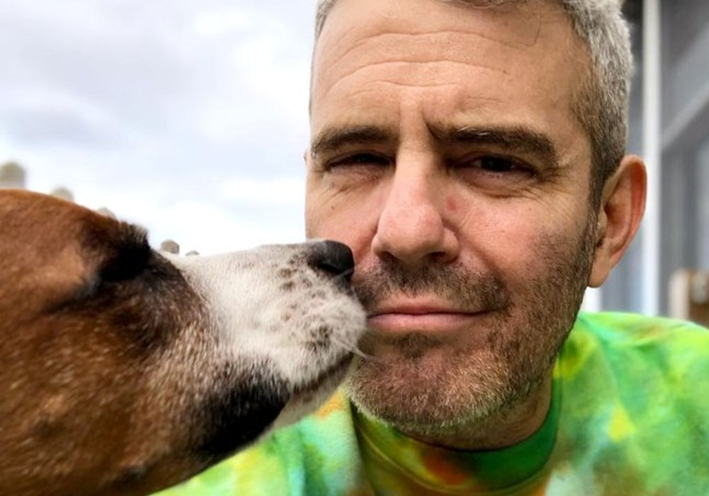 """""""andy-cohen-sadly-says-goodbye-to-rescue-pup-wacha-rehomes-the-dog-to-keep-his-son-safe"""""""